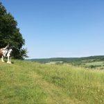 Bedeutung der Tiere - TILL e.V. - Tiergestütztes Leben und Lernen
