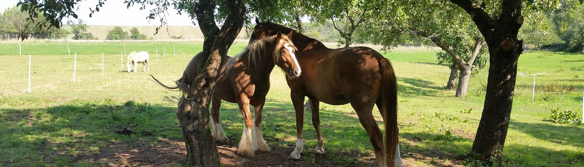 TILL e.V. - Tiergestütztes Leben und Lernen